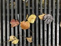 Feuilles d'automne sur le drain photos libres de droits
