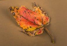 Feuilles d'automne sur le feu images stock