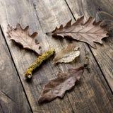 Feuilles d'automne sur le fond de conseils en bois Photographie stock libre de droits