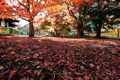 Feuilles d'automne sur le fond de soleil Images stock