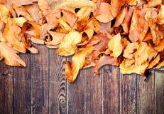 Feuilles d'automne sur le fond en bois photos stock