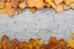 Feuilles d'automne sur le fond en pierre Image libre de droits