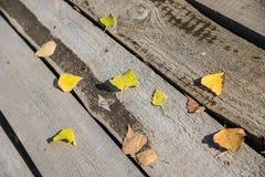 Feuilles d'automne sur le plancher image libre de droits