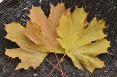 Feuilles d'automne sur le tronc d'arbre, fond Photos stock