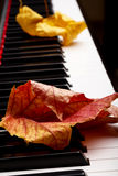 Feuilles d'automne sur les clés Photo libre de droits