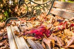 Feuilles d'automne sur un banc de parc Photographie stock libre de droits