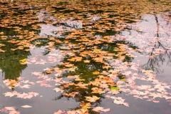 Feuilles d'automne sur un lac reflétant un pinetree photo libre de droits