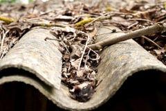 Feuilles d'automne sur un toit Photo stock