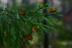 Feuilles d'automne sur une branche Photographie stock
