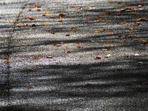 Feuilles d'automne sur une route Images stock