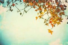 Feuilles d'automne sur une vieille carte postale de papier Photographie stock