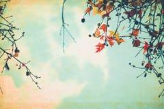 Feuilles d'automne sur une vieille carte postale de papier Photo libre de droits