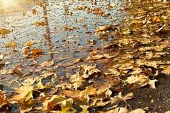 Feuilles d'automne tombées dans l'eau Photographie stock