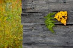 Feuilles d'automne tombées jaunes et vertes colorées sur le fond gris en bois Image stock