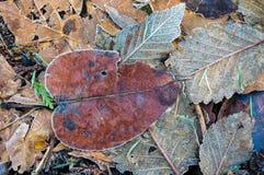 Feuilles d'automne tombées pour le fond Image libre de droits