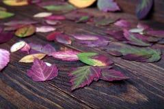 Feuilles d'automne tombées se trouvant sur le plancher Photographie stock libre de droits