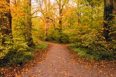 Feuilles d'automne tombées sur la traînée de marche dans la forêt de Salcey le jour nuageux - horizontal Photo libre de droits