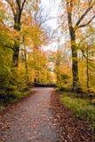 Feuilles d'automne tombées sur la traînée de marche dans la forêt de Salcey le jour nuageux - verticale Photographie stock libre de droits