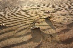 Feuilles d'automne tombées sur le sable photographie stock libre de droits