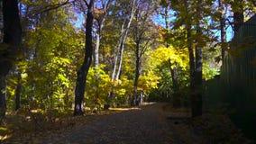 Feuilles d'automne tombant dans le mouvement lent automne coloré banque de vidéos