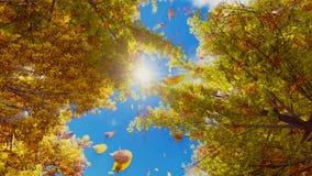 Feuilles d'automne tombant des arbres dans le mouvement lent banque de vidéos