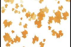 Feuilles d'automne tombant vers le bas avec le fond blanc, vidéo