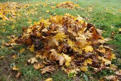 Feuilles d'automne tombées par pile Images libres de droits