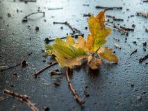 feuilles d'automne d'un chêne se trouvant sur la rue après le rai photos libres de droits