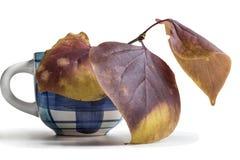 Feuilles d'automne d'un lilas photographie stock libre de droits