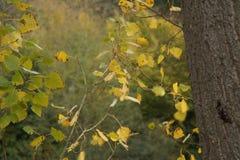 Feuilles d'automne - vue de face Photographie stock