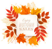 Feuilles d'Autumn Sales Banner With Colorful Photo stock