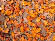 Feuilles d'or de pavé rond d'automne Images libres de droits