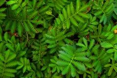 Feuilles d'herbe de couleur verte de papier peint Photos stock