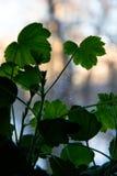Feuilles d'herbe verte sur le rebord de fenêtre photo libre de droits