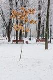 Feuilles d'hiver couvertes de neige et de gelée Photos libres de droits