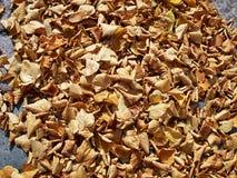 Feuilles d'hiver d'automne Images libres de droits
