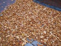Feuilles d'hiver d'automne Photographie stock