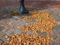 Feuilles d'hiver d'automne Image libre de droits