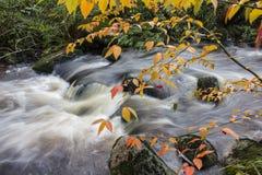 Feuilles d'hiver et baies devant la cascade Images libres de droits