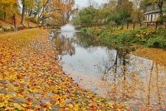 Feuilles d'orange d'automne en parc photos stock