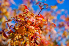 Feuilles d'orange en ciel bleu Photo libre de droits