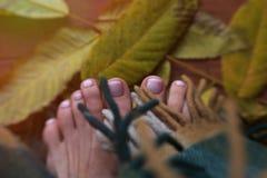 Feuilles d'orteils en automne Matin ensoleillé d'automne, les orteils, enveloppés photo libre de droits