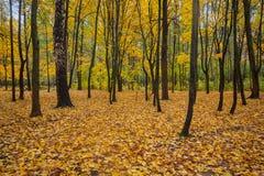 Feuilles d'or tombées en parc d'automne image stock