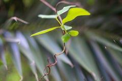 Feuilles d'une plante verte images stock