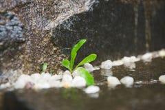 Feuilles d'usine sur une roche humide Photographie stock libre de droits