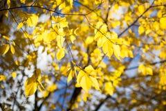 Feuilles dans l'automne Photo libre de droits