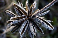 Feuilles dans le gel Photos libres de droits