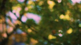 Feuilles de balancement dans le vent avec un fond vert ensoleillé d'été lumineux hors focale clips vidéos