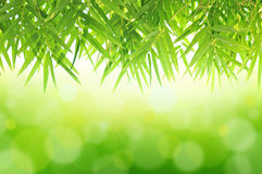 feuilles de ?Bamboo sur le fond abstrait vert Photos stock