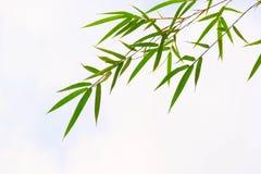 Feuilles de bambou image libre de droits